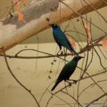 Beautiful Senegalese Birds