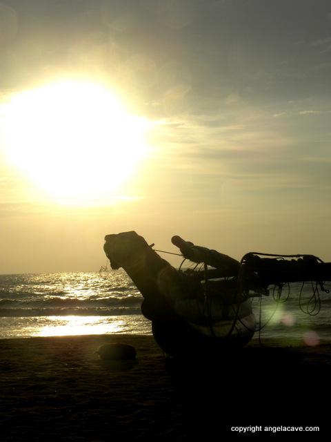 Negumbo sunset